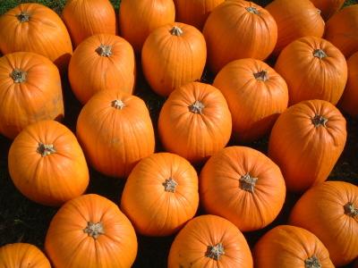pumpkin pathces in anne arundel county maryland