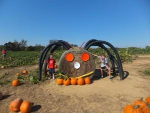 pumpkin patches in anne arundel county